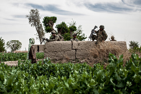 Bryan Denton for The New York TimesIn April, Afghan and American soldiers patrolled through poppy fields in the village of Barakzai, in the Sangesar area of the Zhare district. (c) New York Times 2012